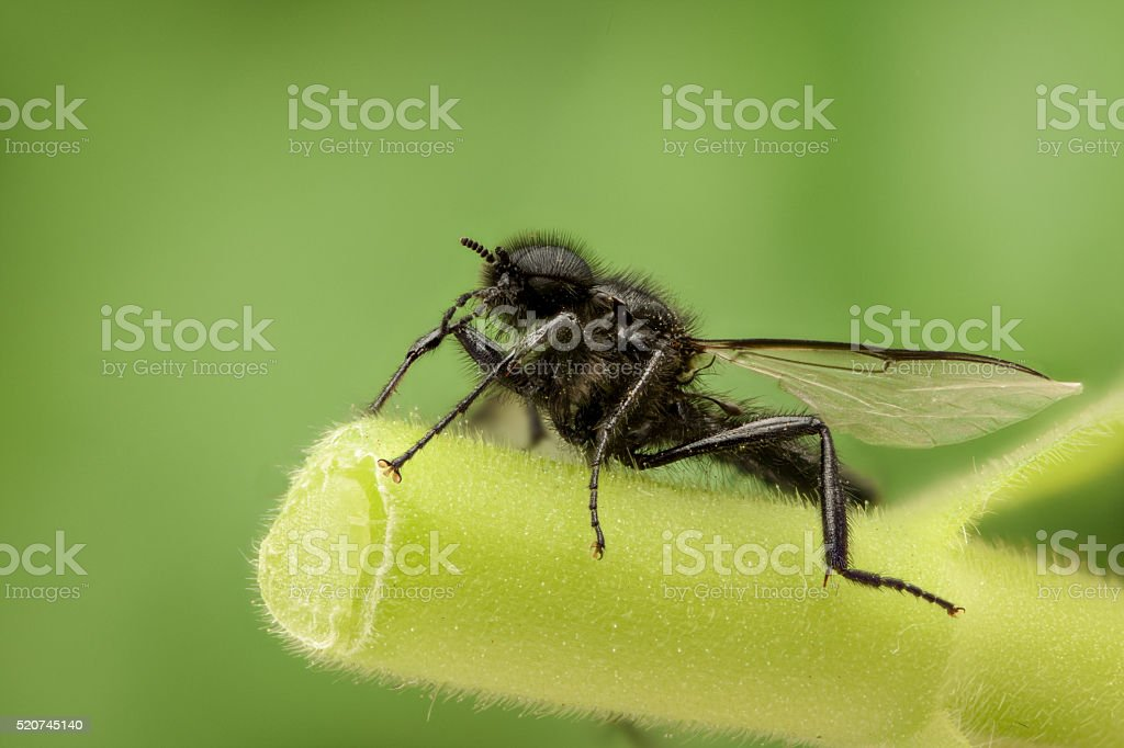 Black wasp in nature stock photo