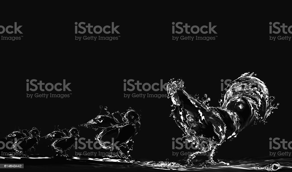 Black Water Rooster and Chicks royalty-free stock photo