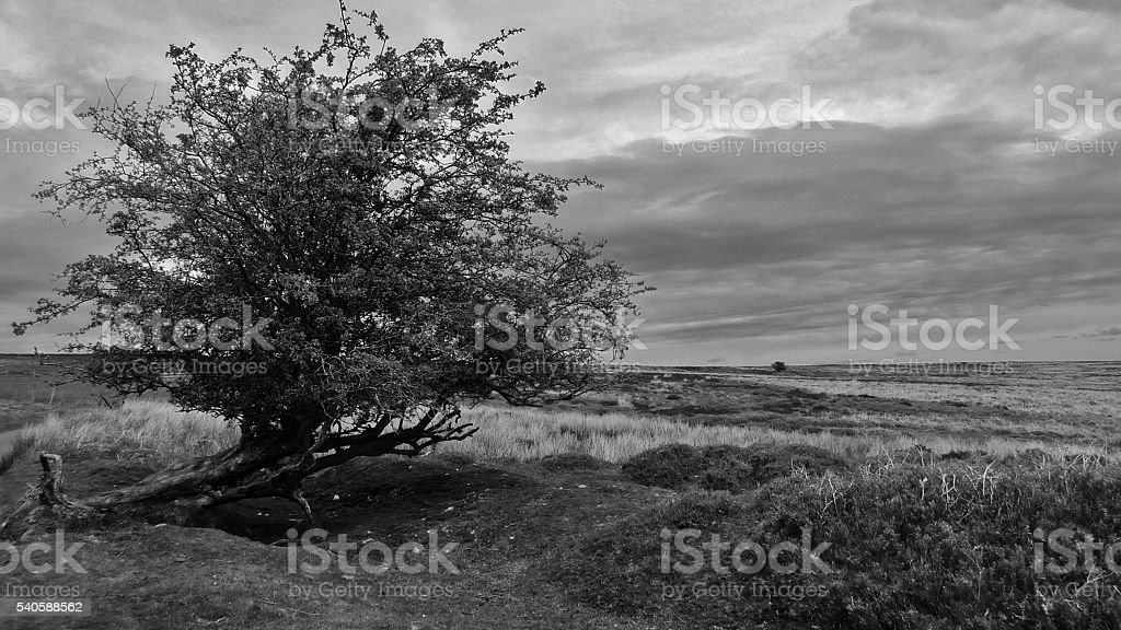 Black & White Landscape 012 stock photo