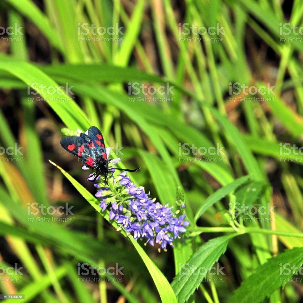 black wild Butterfly on bush stock photo