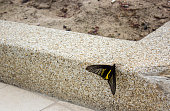 black yellow butterfly on side way