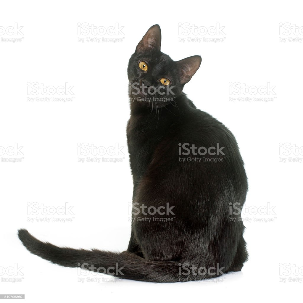 black young cat stock photo