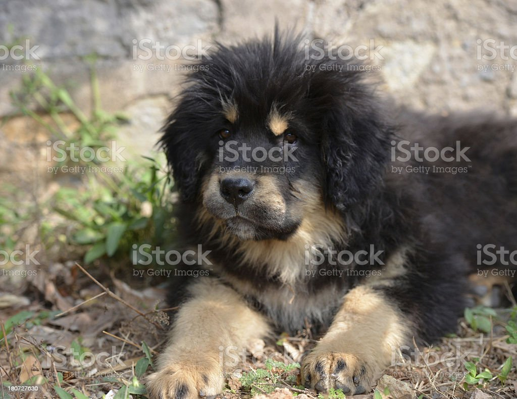 black young dog stock photo