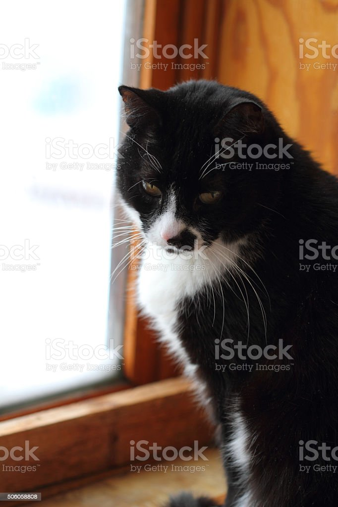 black-and-white sad cat stock photo