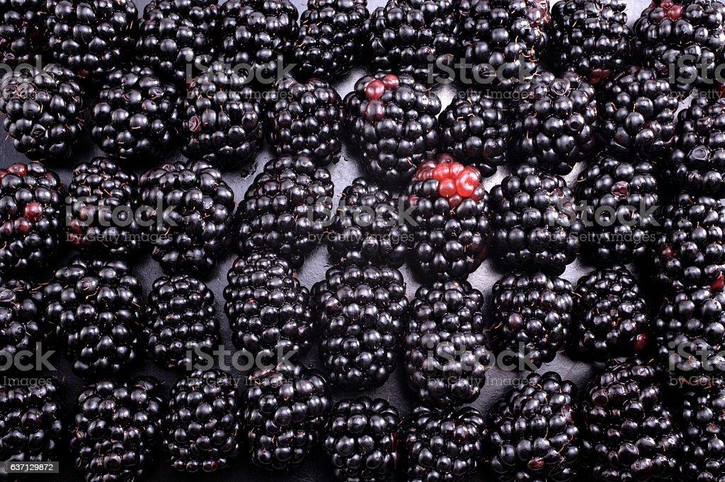blackberries background stock photo