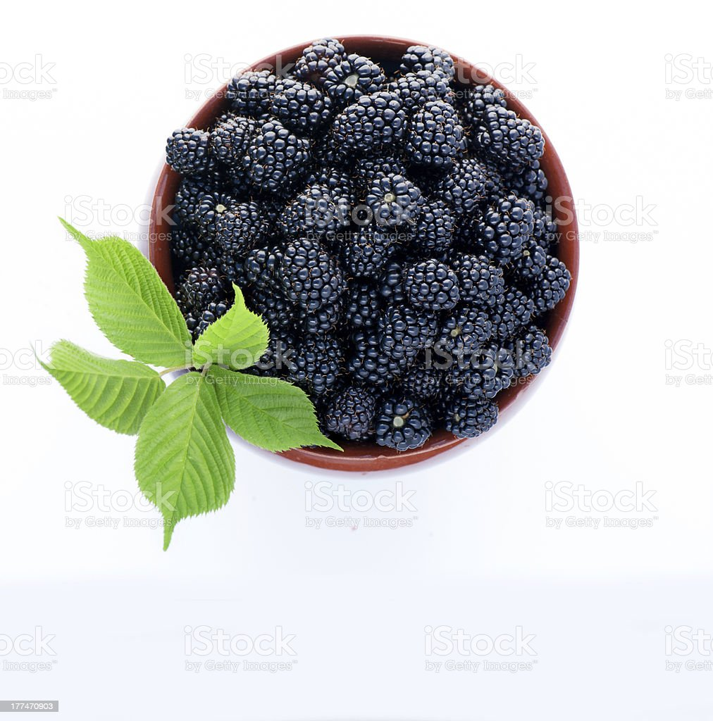 blackberries in a clay jug royalty-free stock photo