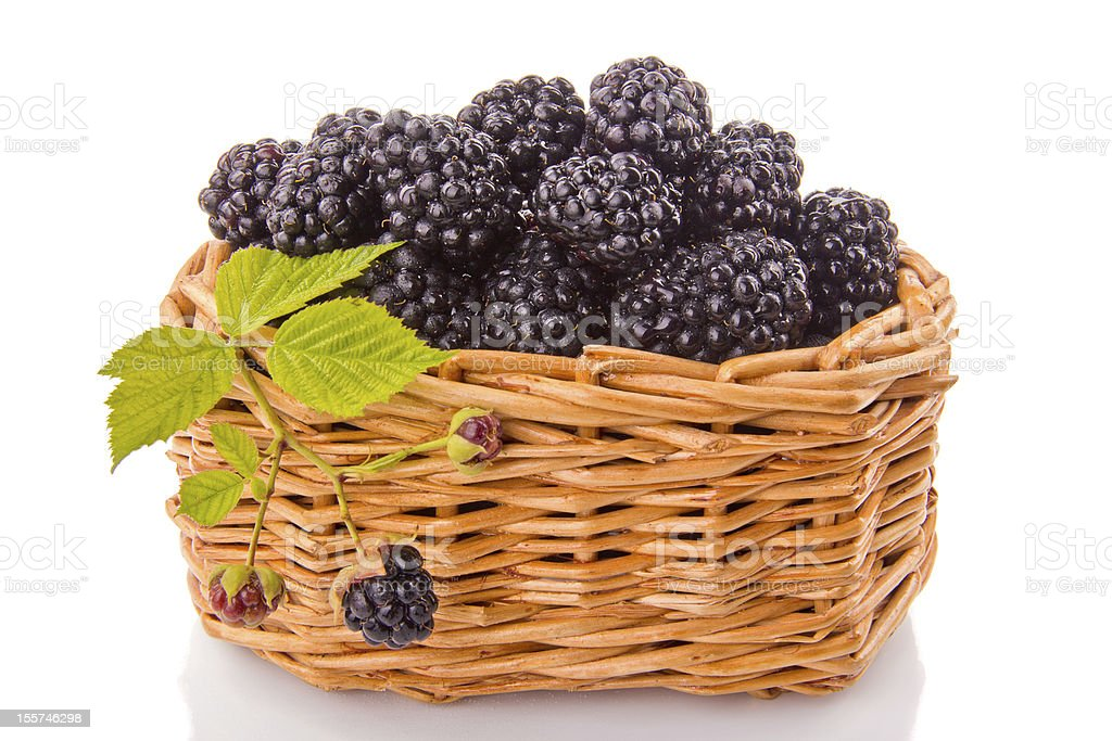 Blackberries in a wicker basket royalty-free stock photo