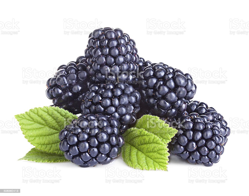 Blackberries isolated on white background. stock photo