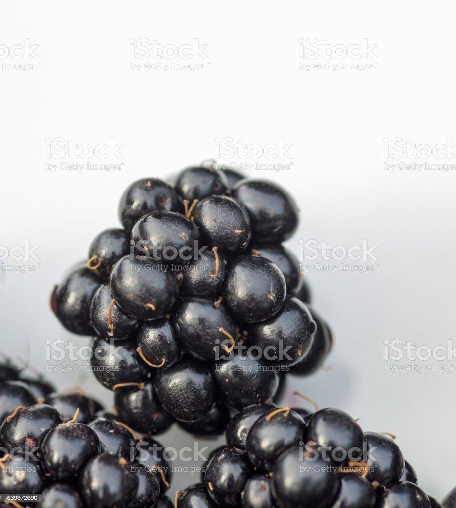 Blackberries macro stock photo
