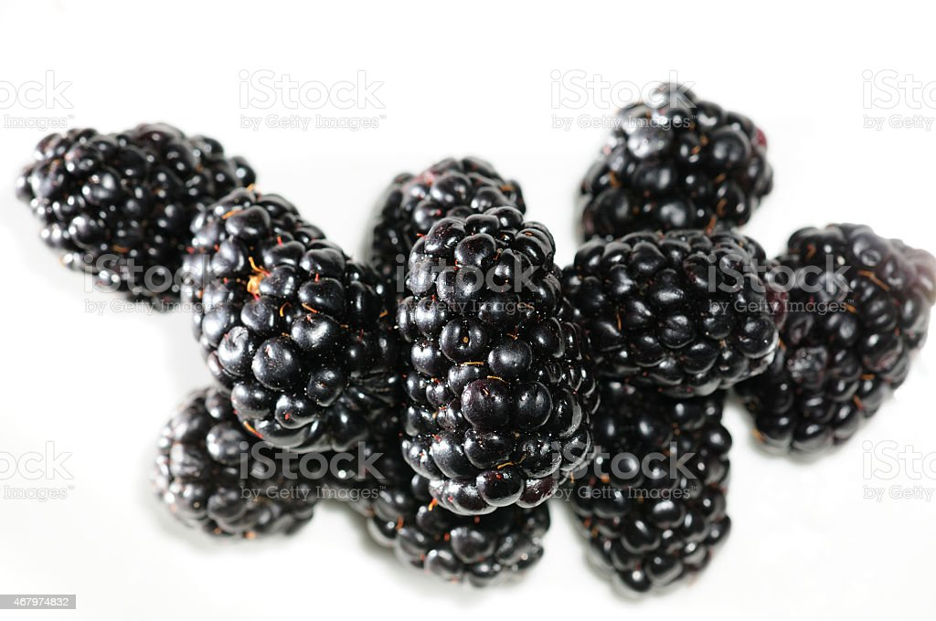 Brombeeren stock photo