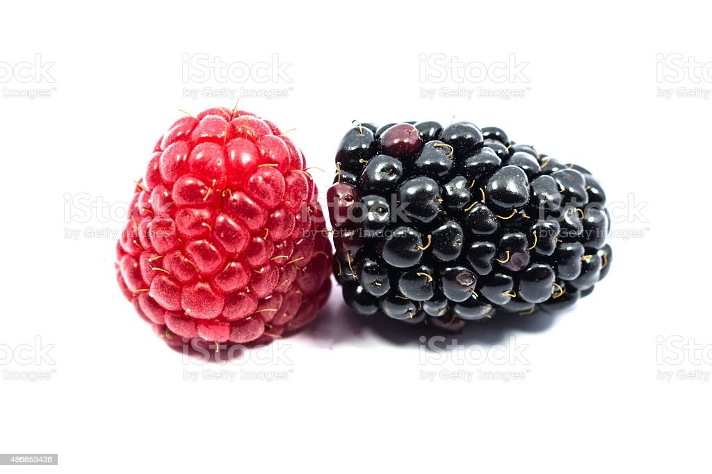 blackberry and raspberry isolated on white background stock photo