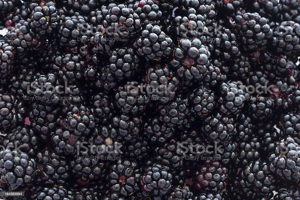 Blackberry Background stock photo