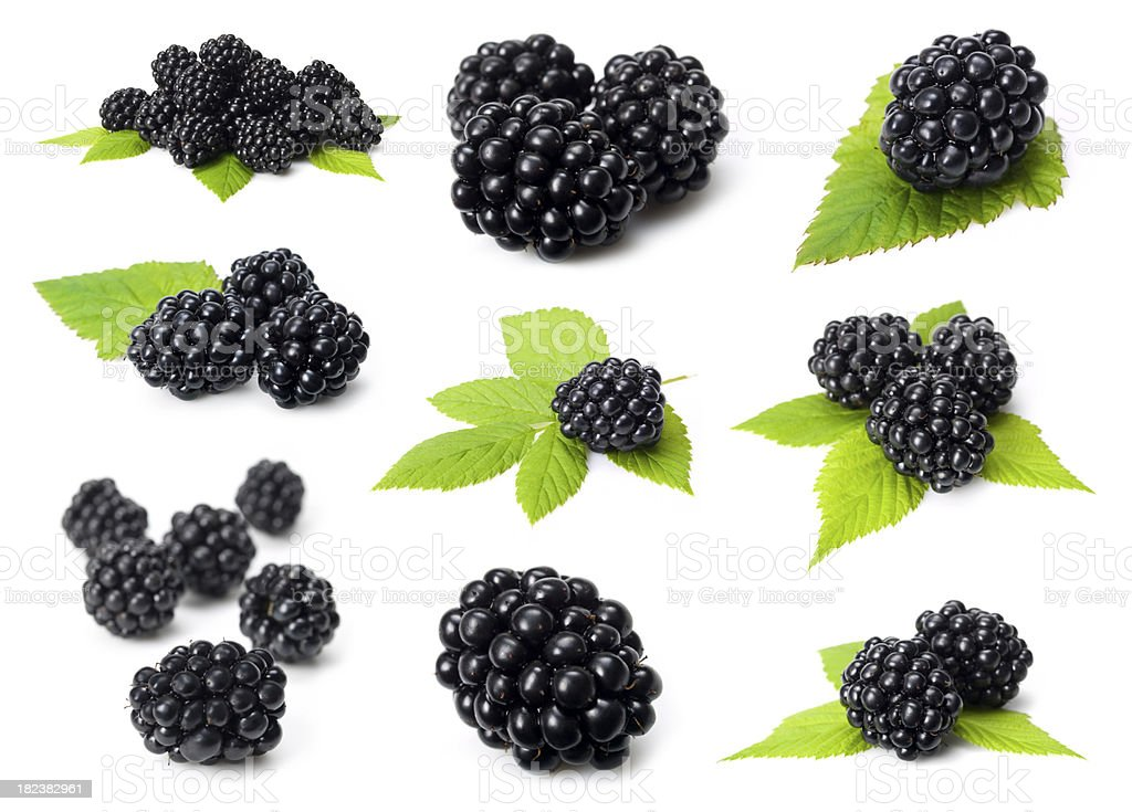 blackberry collection royalty-free stock photo