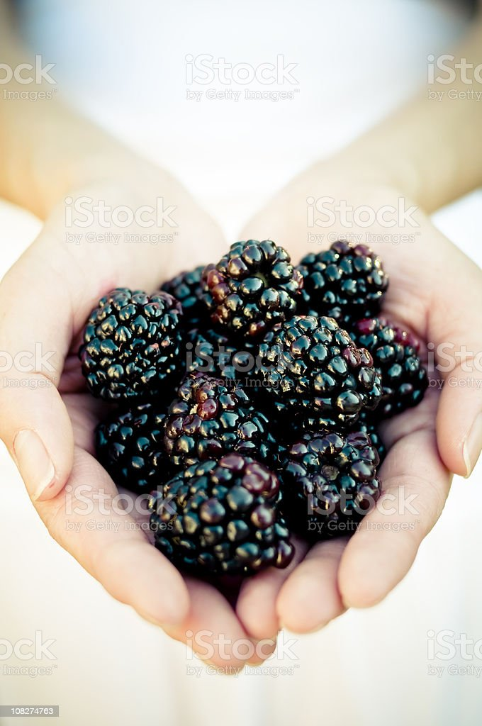 Blackberry Fruit royalty-free stock photo