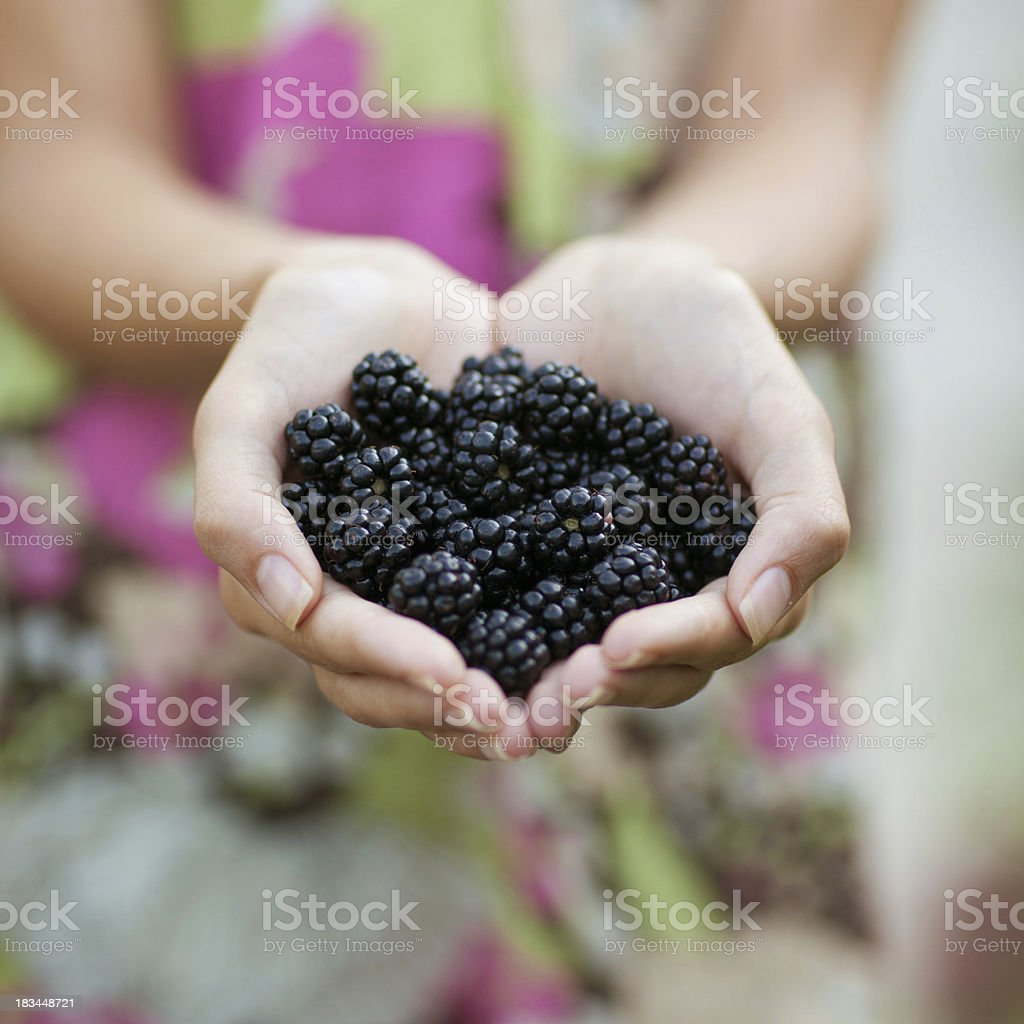 Blackberry in hand royalty-free stock photo
