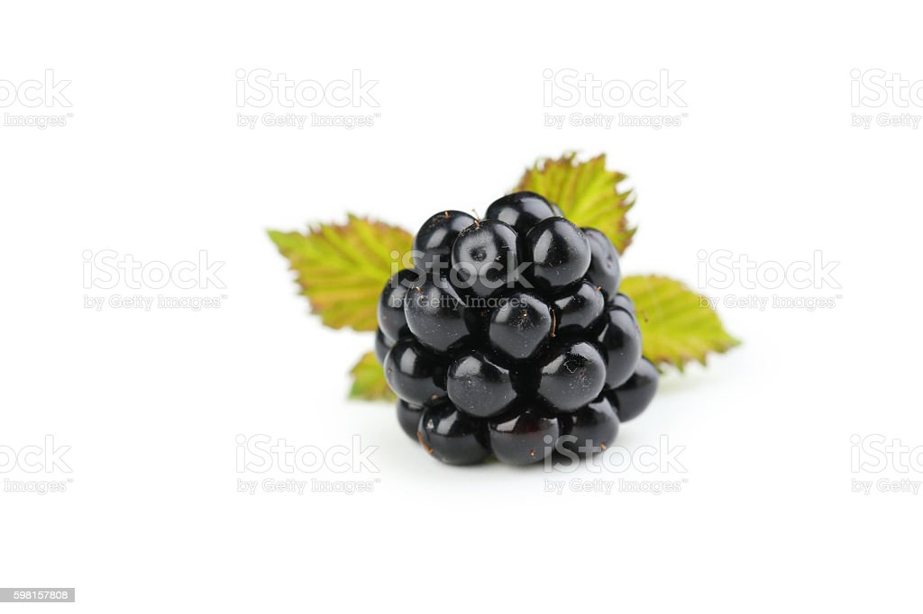 Blackberry isolated on a white stock photo