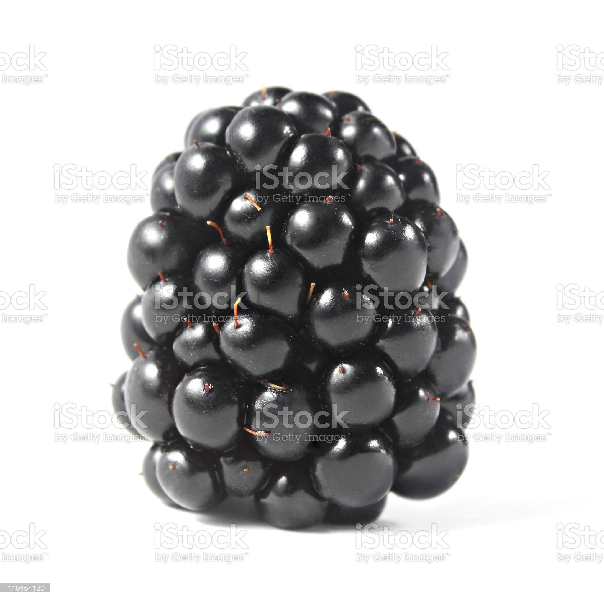 Blackberry isolated royalty-free stock photo