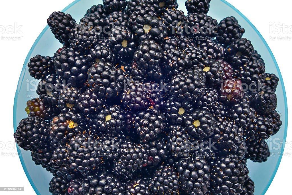 Blackberry. stock photo