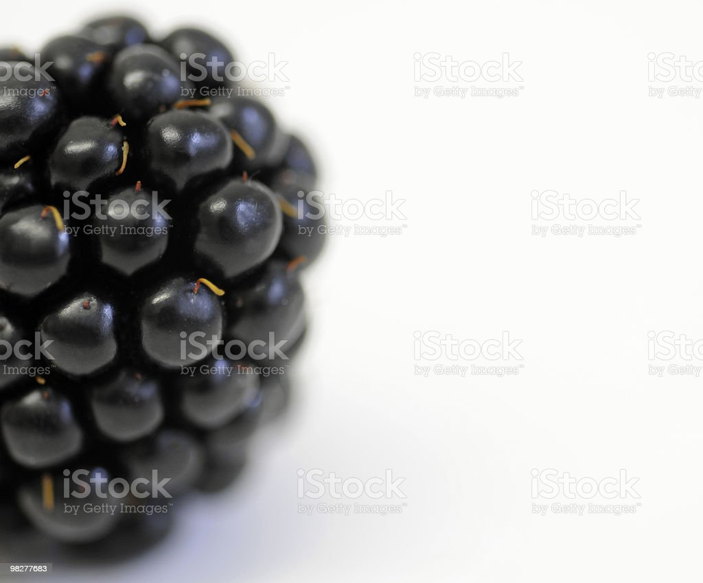 blackberry with copy space stock photo