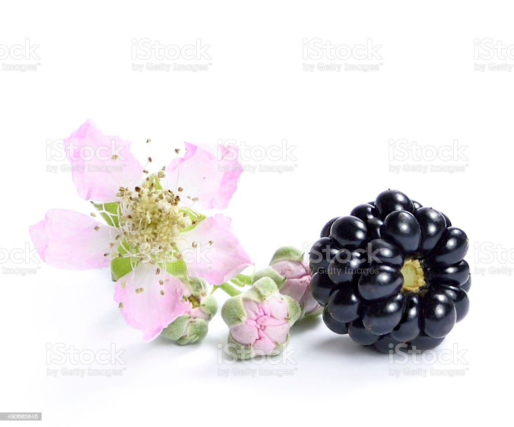 Blackberry with flower stock photo