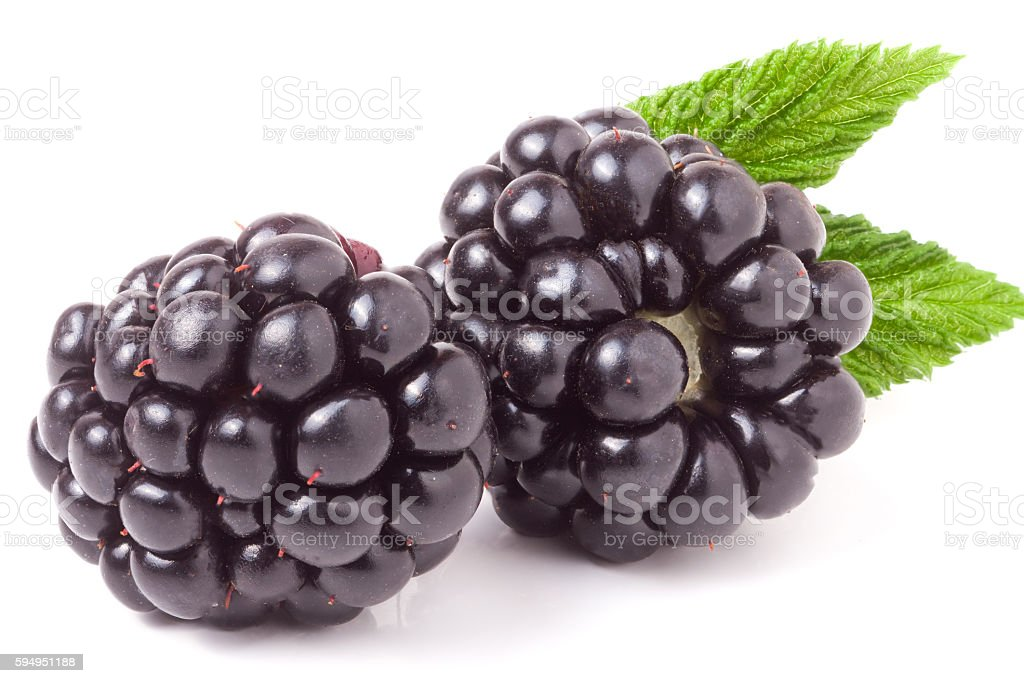 blackberry with leaf isolated on a white background closeup stock photo