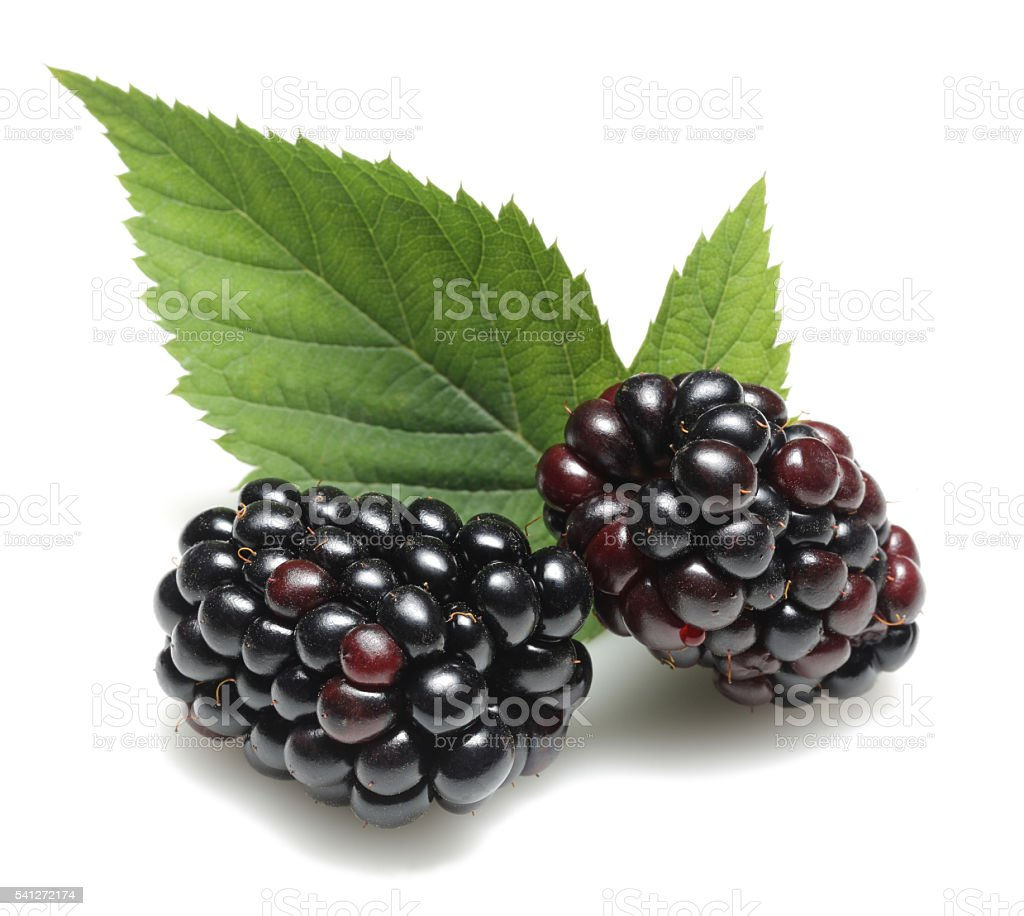 Blackberry with leaves stock photo