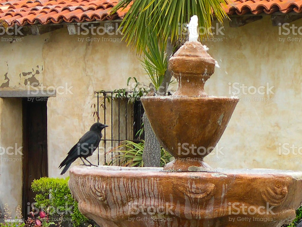 Blackbird sitting on Fountain Gardens Old Mission Church Carmel California stock photo