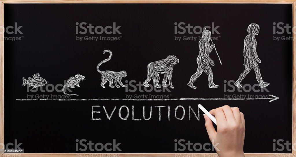 Blackboard Evolution stock photo