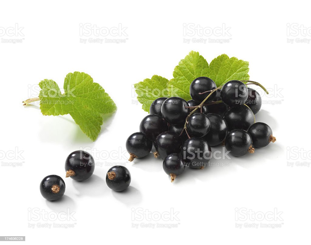 Blackcurrant bunch with Leafs royalty-free stock photo