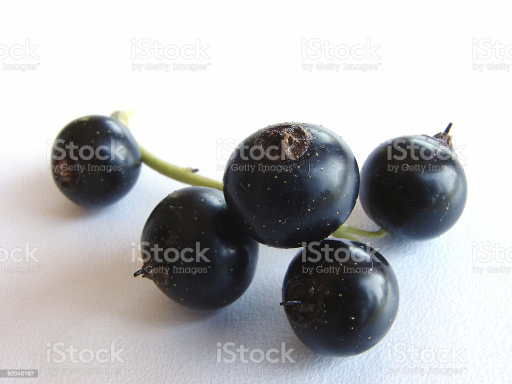 blackcurrant royalty-free stock photo
