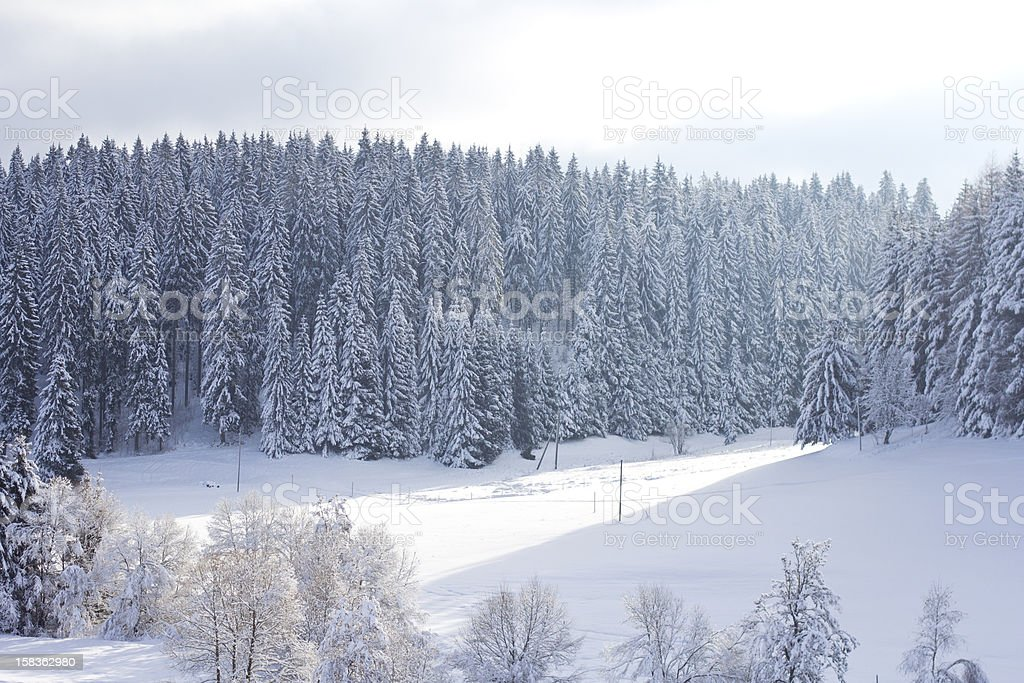 Blackforest in Winter royalty-free stock photo