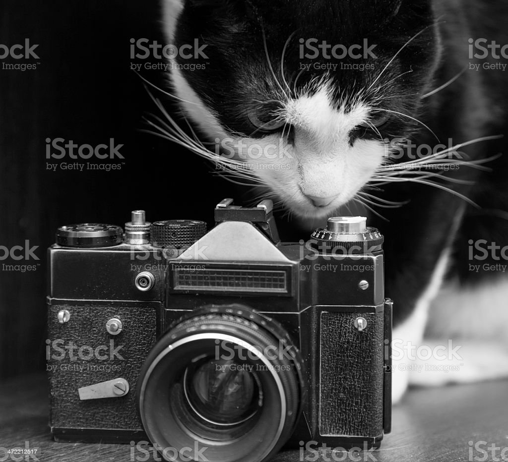 black'n white cat and vintage photo camera stock photo