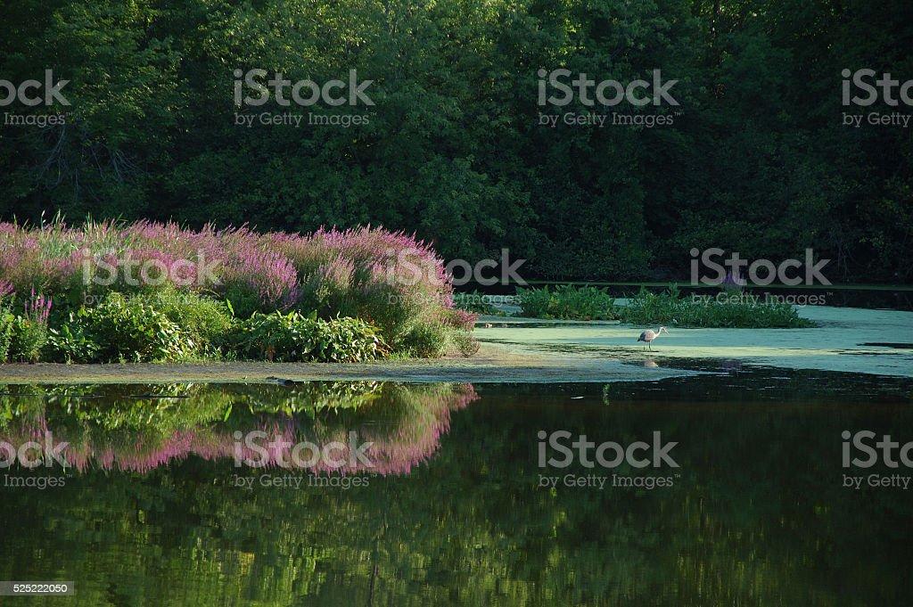 Blackstone River in summer stock photo
