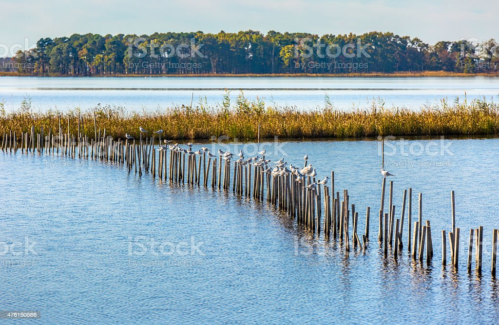 Blackwater National Wildlife Refuge with Birds on Posts stock photo
