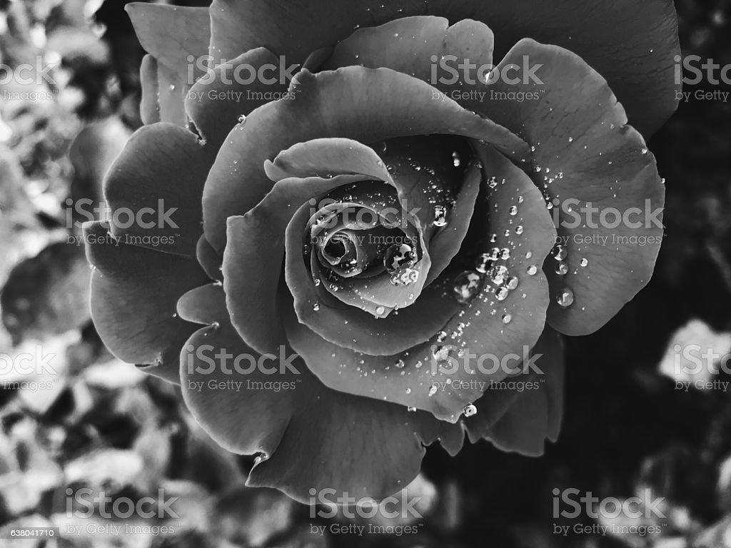 Black/White stock photo