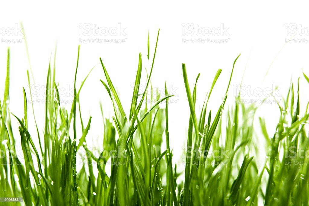 Blade of Grass stock photo