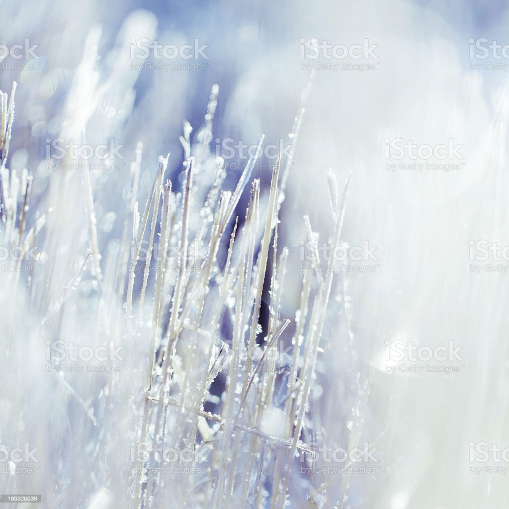 Blade of grass with white frost on them stock photo