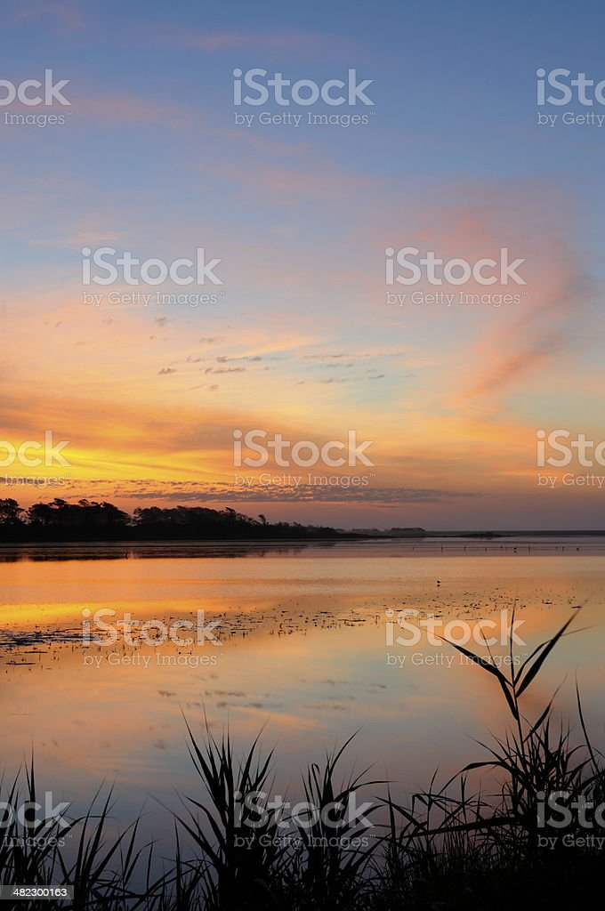 Blades of Grass and Calm Water at Twilight stock photo