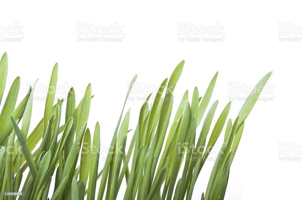 Blades of grass royalty-free stock photo
