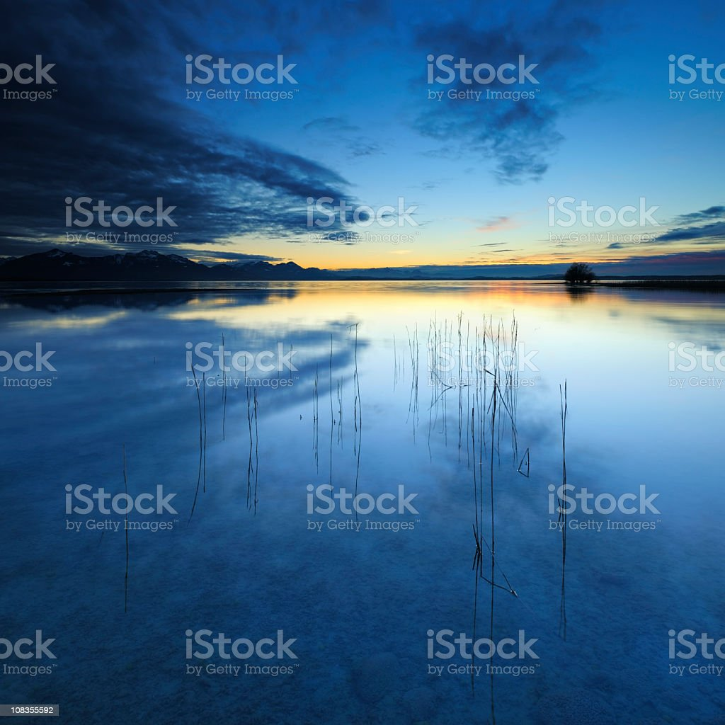 Blades of Reed in Lake Chiemsee at Sunset stock photo