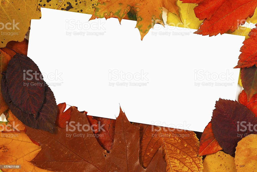 Blank card in leaves royalty-free stock photo