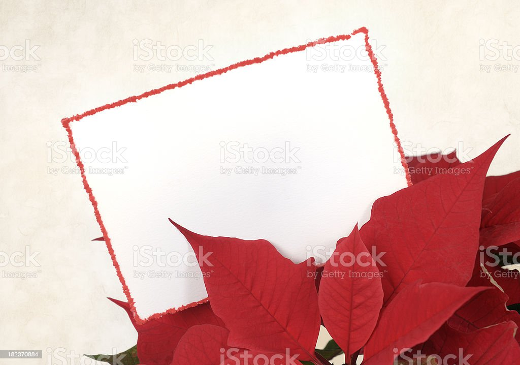 Blank card with red border in poinsettia leaves royalty-free stock photo