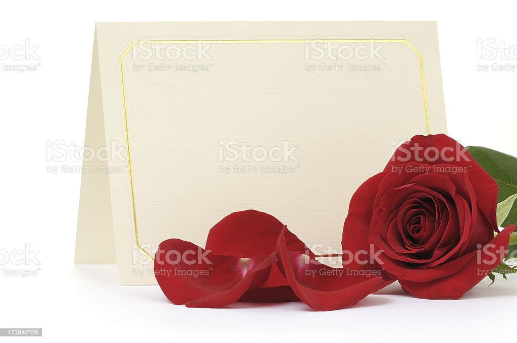 Blank card with red rose royalty-free stock photo
