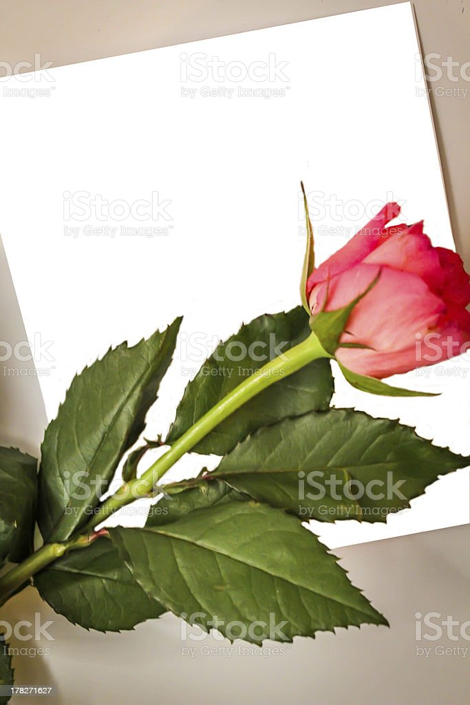 Blank Greeting Card and Red Rose royalty-free stock photo