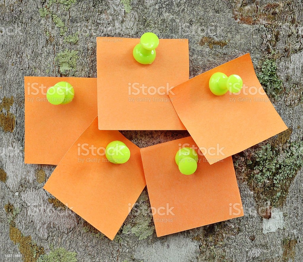 Blank memo notes pinned on cork notice board royalty-free stock photo