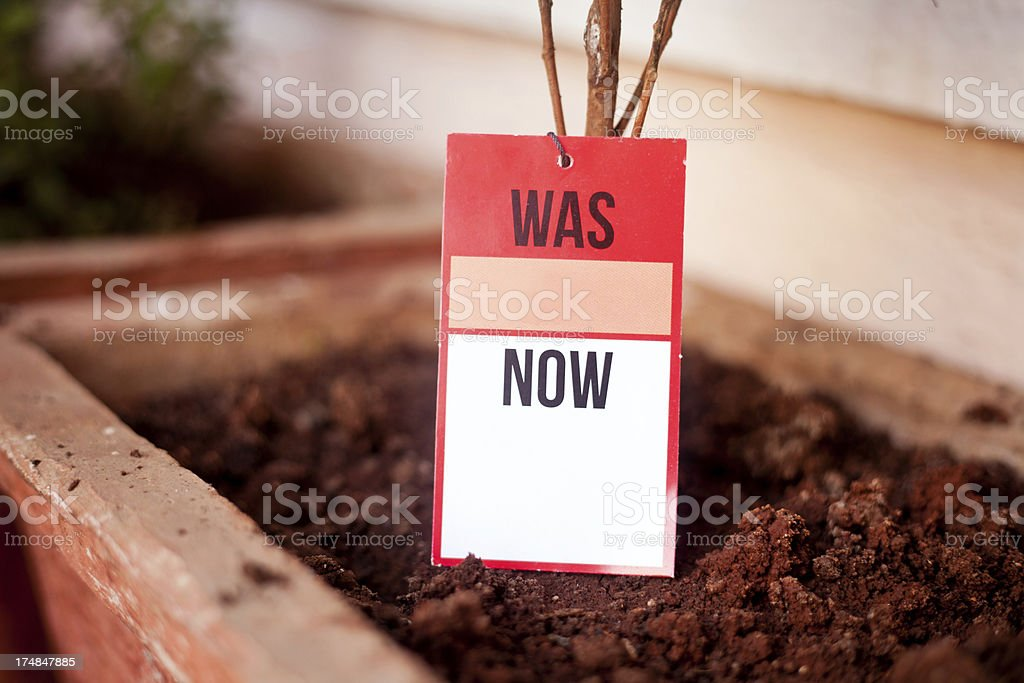 Blank Sale Tag Label on a Plant royalty-free stock photo