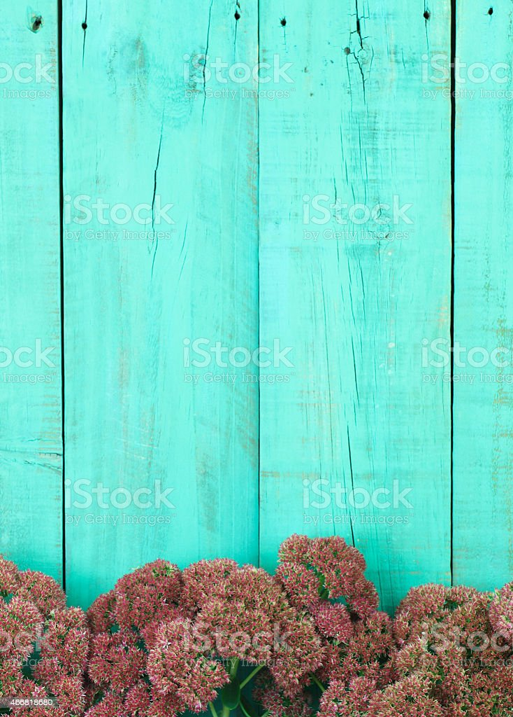 Blank sign with stonecrop border stock photo