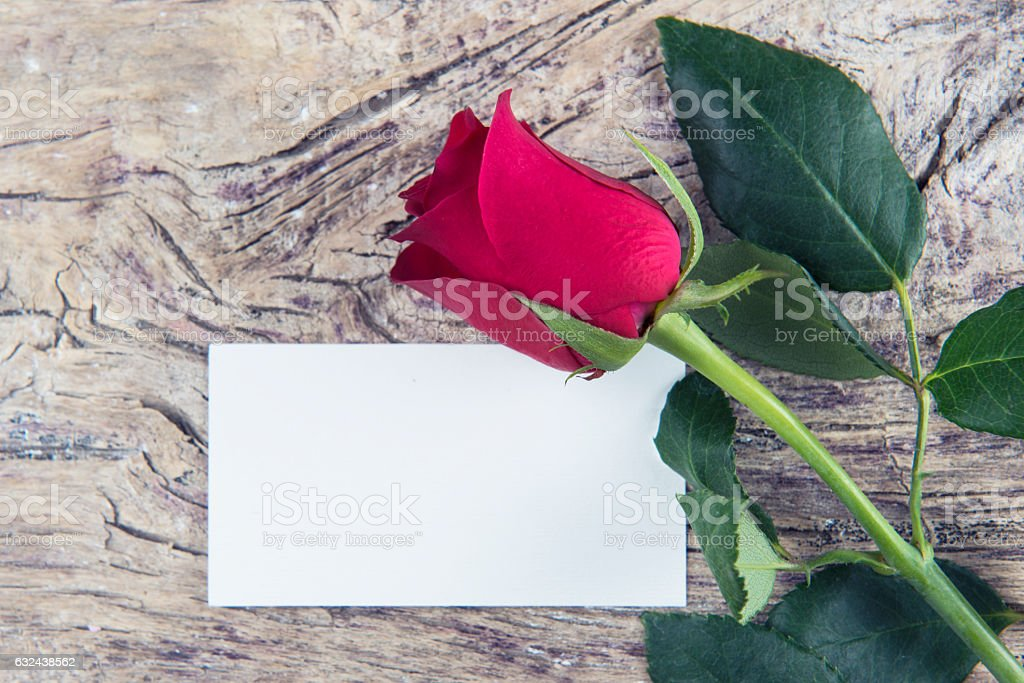 Blank space for love message Valentine's day with red rose stock photo
