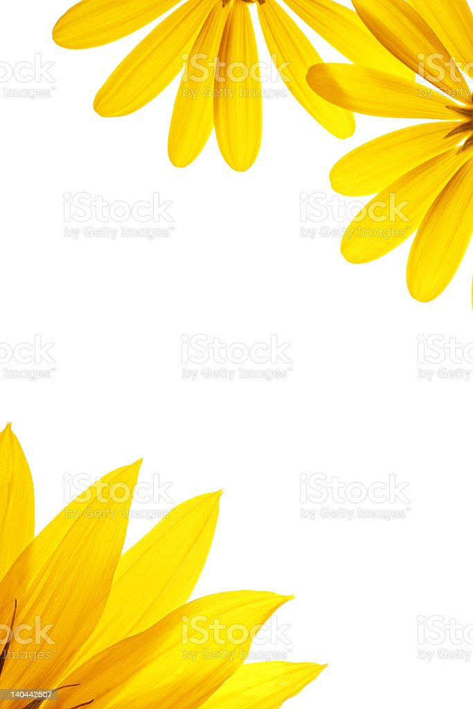 Blank white page decorated with natural sunflower details royalty-free stock photo