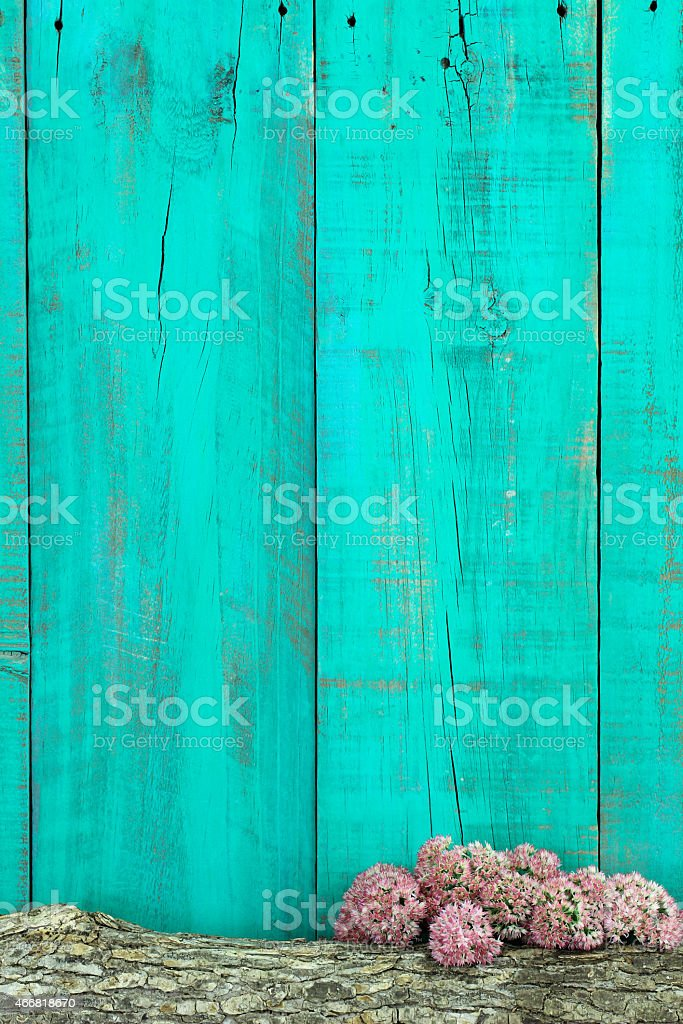 Blank wood background with log and stonecrop border stock photo